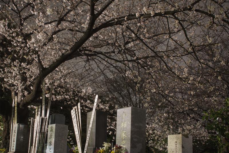 Last Cherry Flowers